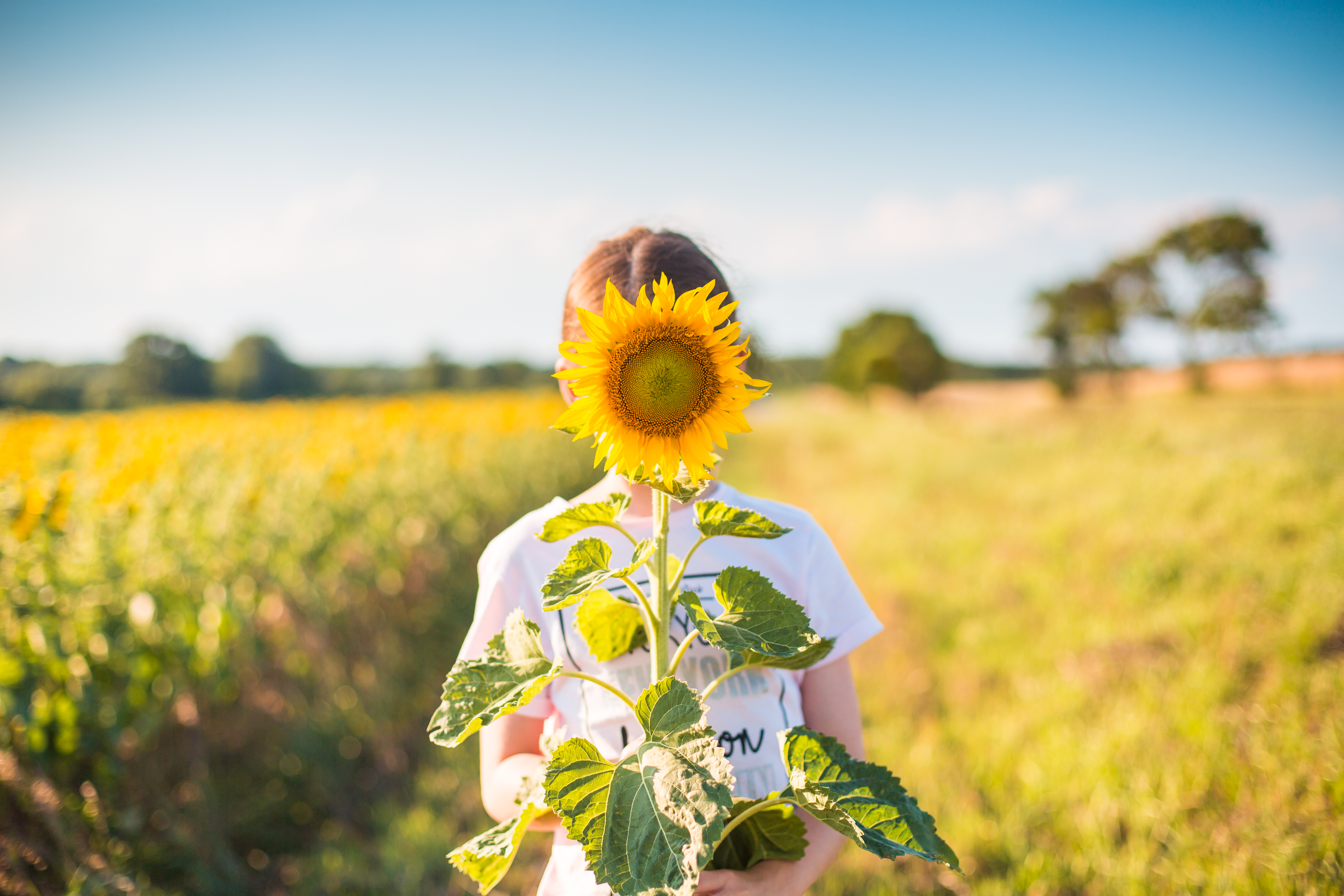 little-girl-with-sunflower-in-a-sunflower-field-picjumbo-com